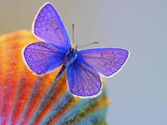 blue blue butterfly.jpg