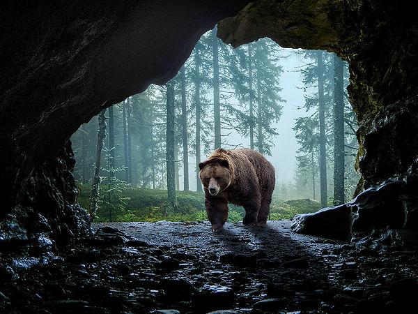 bear enter cave.jpg