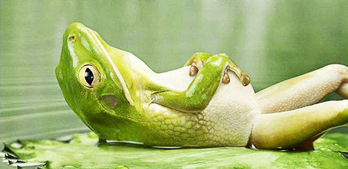 frog relaxing good.jpg