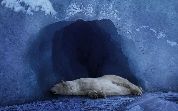 polar bear sleep cave.jpg