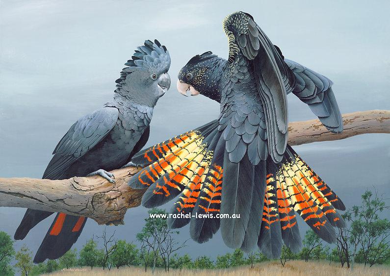 Birds74.jpeg