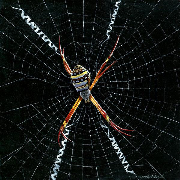 St Andrews Cross Spider.jpg