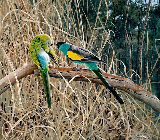 Hooded Parrots.jpg