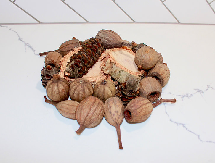 Premium Pack - Melaleuca Slices, Gum Nuts and Banksia Cones - priced from $25