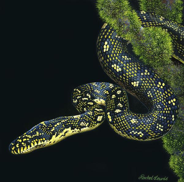 Diamond Python.jpg