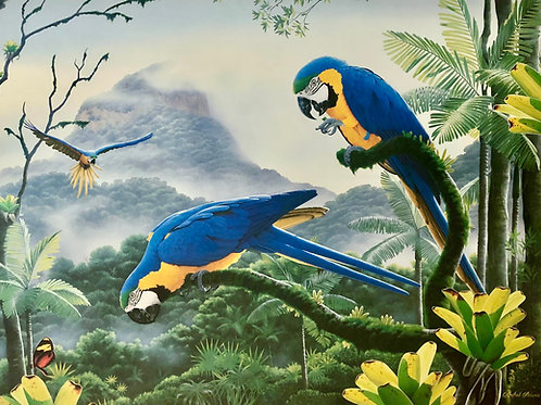 Majestic Macaws