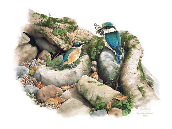 Scared Kingfishers