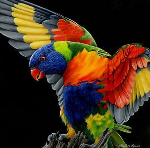 Rainbow Lorikeet.jpg