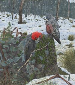 Winter Wonderland by Rachel Lewis