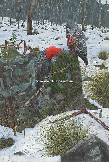 Birds56.jpg