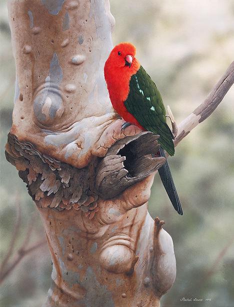King Parrot _Royal Guardian_ 1.jpg