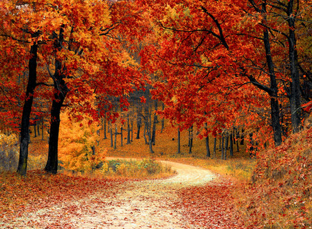 Fall Is A Super Season For Rejuvenating Mind, Body & Spirit