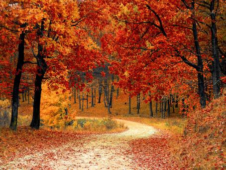 Fall Is A Super Season For Rejuvenating Mind, Body & Spirit