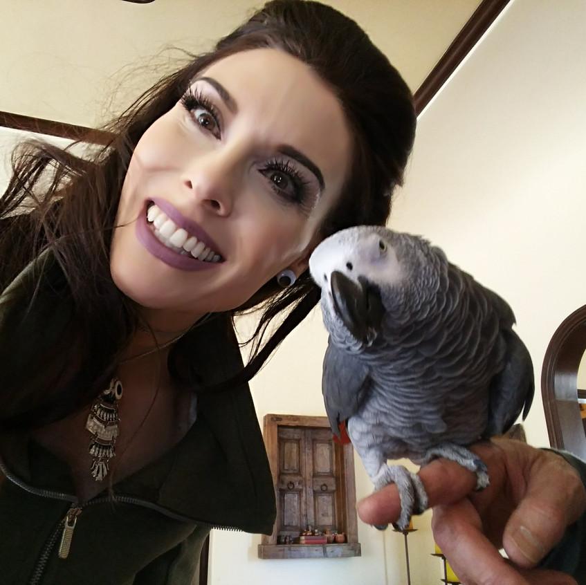 bogey parrot p4p (1)