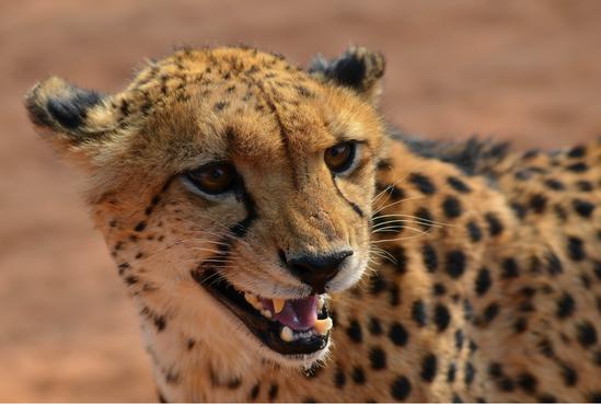 Safari at Etosha National Park - (c) Sonja Piontek