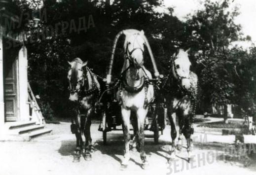 Фотография ч/б. Тройка лошадей у парадного входа в Чашниково.