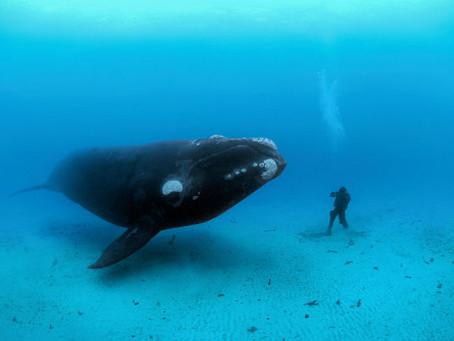 Santuario Pelagos dei Cetacei