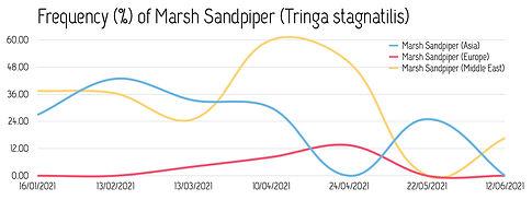 Frequency_MarshSandpiper_2021.jpg