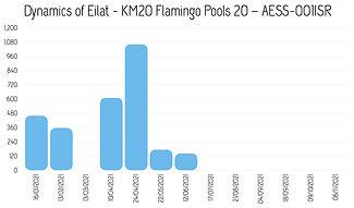 Dynamics_Eilat-20_2021.jpg
