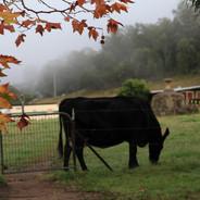 Mornings on the farm