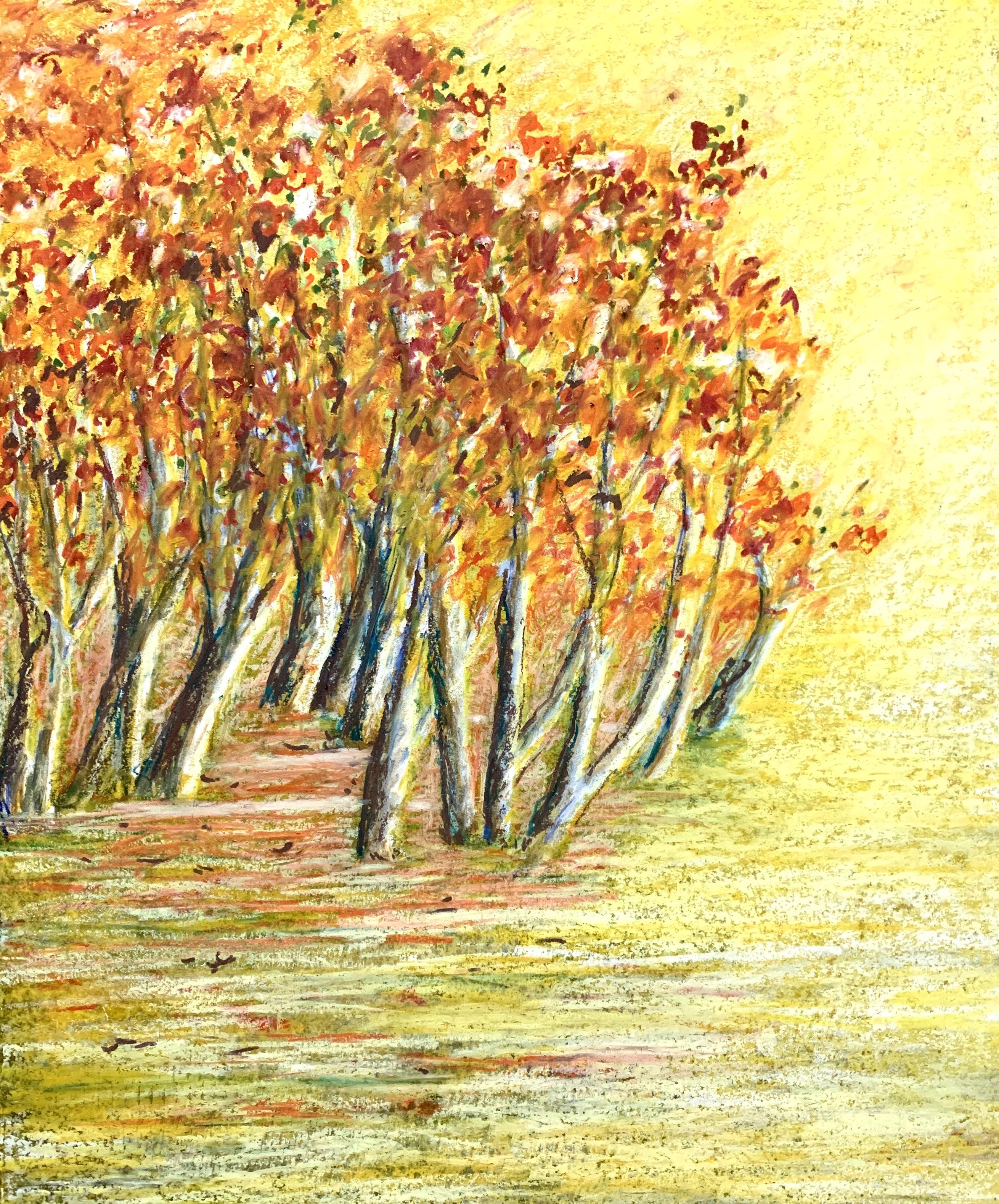Tree n Light 亮光
