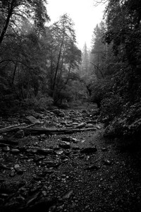 Oak Creek in Mist, Sedona