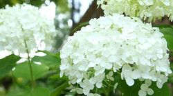 whiteflower_edited
