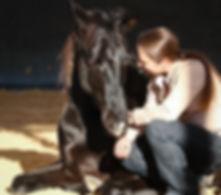 Eine wichtige Voraussetzung für das pferdegerechte Training ist die Vertrauensarbeit. In der Ausbildung zum Pferdeverhaltenstrainer IVK werden die Psychologischen und physiologischen Grundlagen für ein pferdegerechtes Training vermittelt.