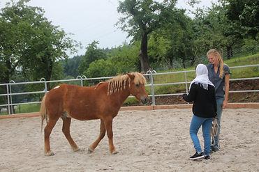Wir sprechen eine Sprache, Therapeut, Patient und Pferd - pferdegestützter Therapeut IVK