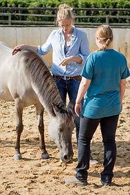 Verhaltenstraining für Mensch und Pferd ist ein wichtiger Inhalt der Ausbildung zum Pferdeverhaltenstrainer IVK