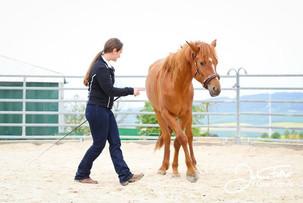 Feine Kommunikation mit dem Pferd