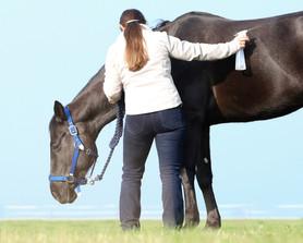 Ausbildung zum Pferdeverhaltenstrainer IVK