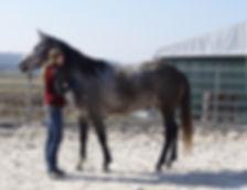 Marie Heger ist Dozentin am Institu für Verhalten und Kommunikation. In der Aubsildung zum Pferdeverhaltensttrainer IVK wird die sinnvolle und pferdegerechte Bodenarbeit vermittelt.