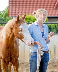 Vermittlung von Wissen rund um das Pferdeverhalten und das pferdegerechte Training in der Aubsildung zum Pferdeverhaltenstrainer IVK