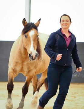 Freiarbeit mit dem Pferd