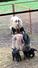 Kuzulu koyunlardayemleme pratikleri