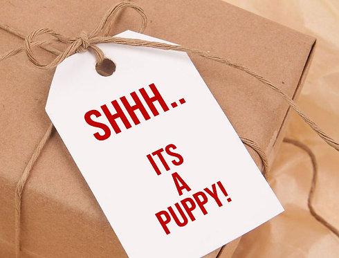 Shh.. It's A Puppy