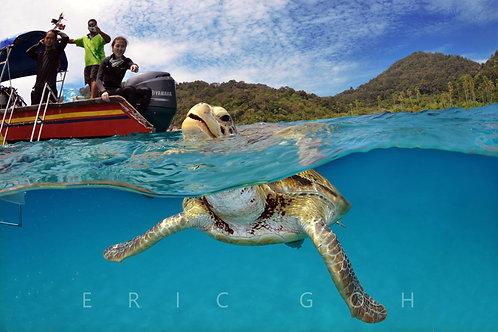 Summer Bay Lang Tengah Resort - 3D2N Snorkeling Full Board Package