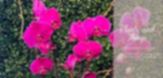 Plantsandthingspostcard-finaledit.png