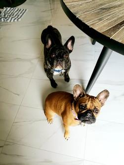 Peanut & Bruno