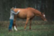 Pferdeosteopathie-NHR Emmett am Pferd
