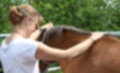 Pferdeosteopathie Behandlung