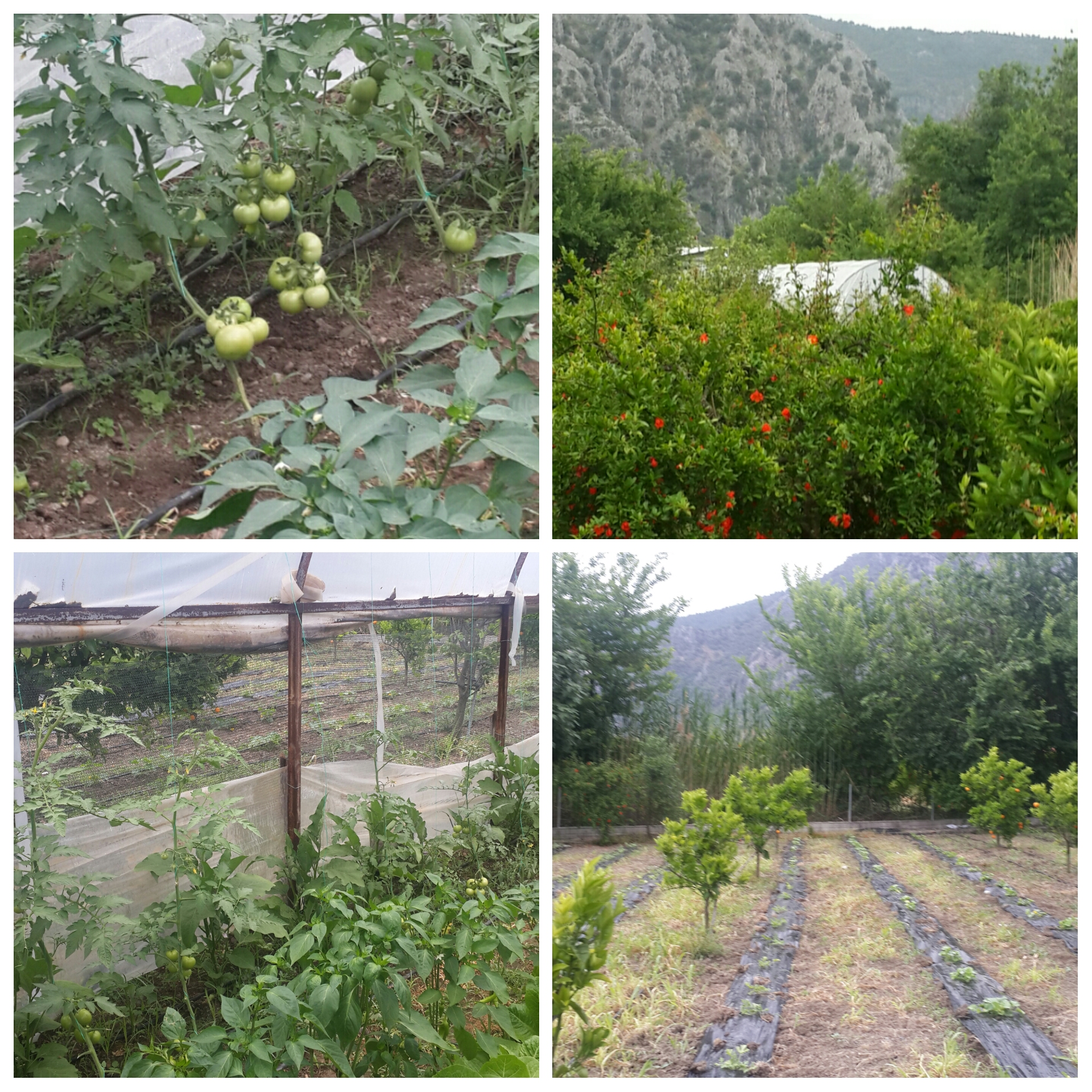 Our organic farm- Organik Ciftlik