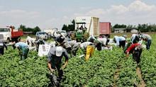 Otros abusos a trabajadores H-2*
