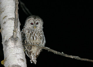 Nature at Night: Learning After Dark