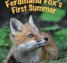 A Review of Ferdinand Fox's First Summer by Mary Holland