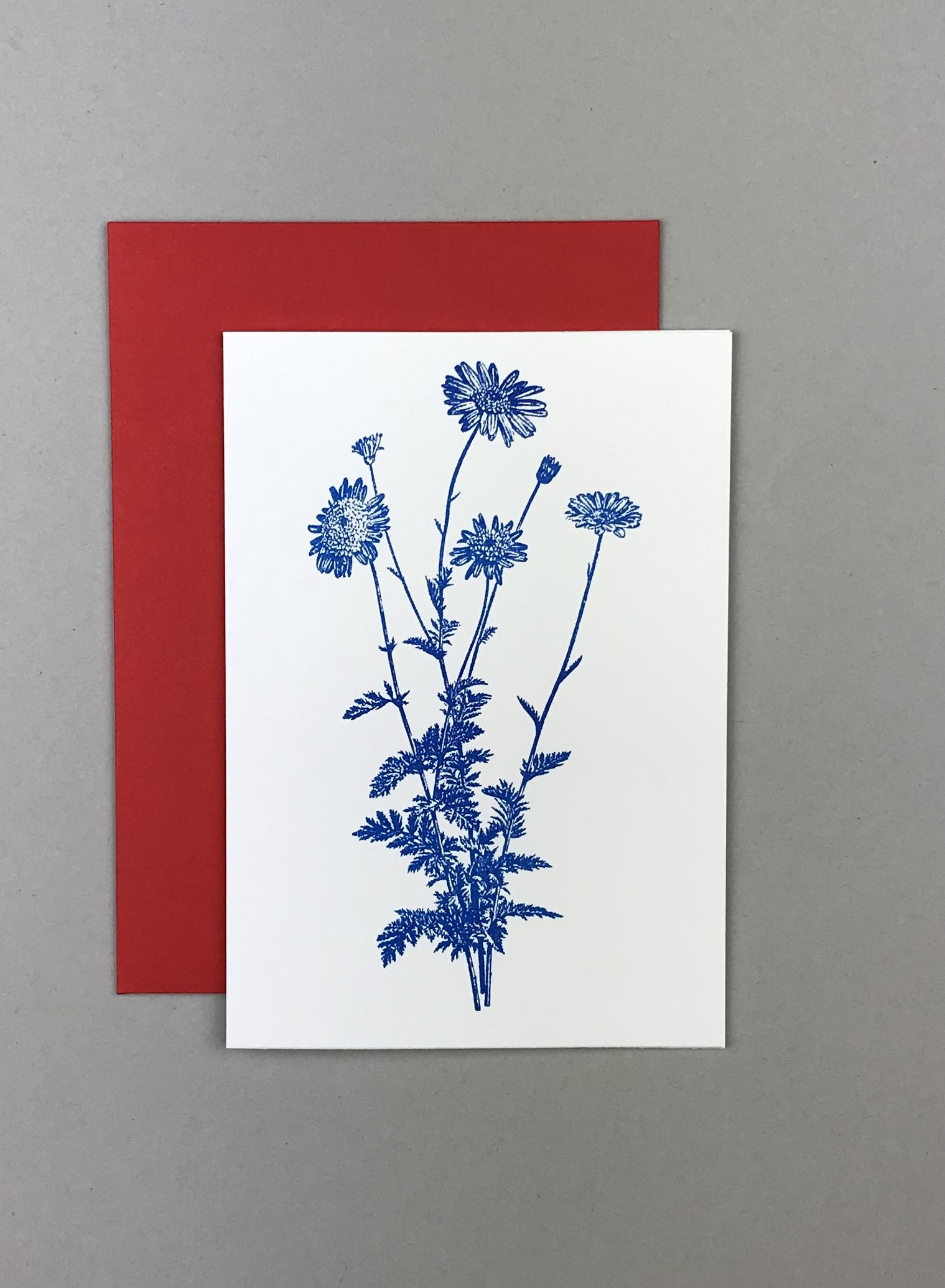 Flower Margerite