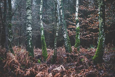 Photo by Julia Joppien on Unsplash.jpg