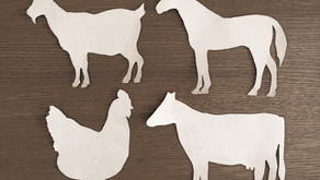 Zestaw do rysowania zwierząt hodowlanych DIY