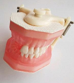 Manequim para Endodontia Pronew